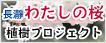 長瀞わたしの桜 植樹プロジェクト