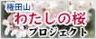 権田山 わたしの桜プロジェクト