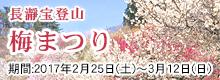 梅まつり2017