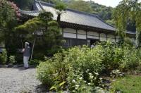 法善寺(藤袴)