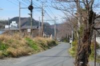 ④南桜通り 2分咲き