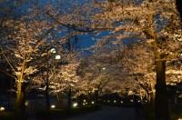 ③北桜通り ライトアップ