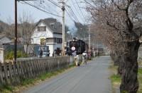 ④南桜通り 開花(1分咲き)