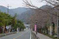 ⑤宝登山参道 1分咲き(本日開花!)