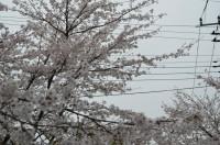 ③北桜通り
