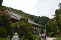 法善寺の藤袴→未開花