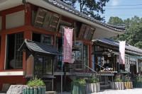 不動寺のナデシコ→8分咲き