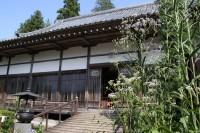 法善寺のフジバカマ→5分咲き