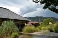 道光寺のオバナ→3分咲き