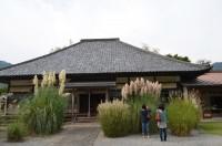 道光寺のオバナ→満開