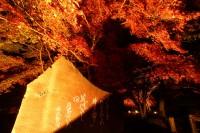 月の石もみじ公園(ライトアップ)→見頃