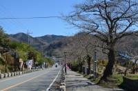 ⑤宝登山参道→未開花