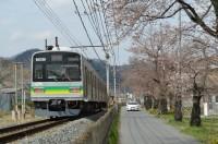 ④南桜通り→1~2分咲き