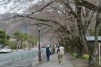 ⑤宝登山参道→1~2分咲き