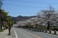 ⑤宝登山参道→7分咲き