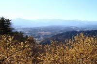宝登山ロウバイ園 04