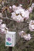 0416nagatoro_torinuke (1)