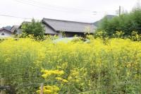 nanakusa_0831ominaeshi_nagatoro (3)
