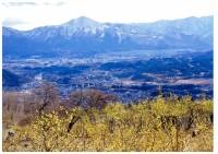 ロウバイ園から武甲山を臨む
