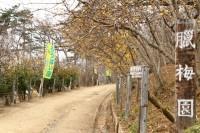 宝登山ロウバイ園 01