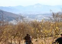 宝登山ロウバイ園 06
