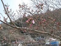 岩田桜 (3)