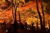もみじ公園ライトアップ (1)