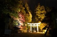 宝登山神社鳥居ライト