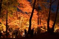 もみじ公園ライトアップ (2)