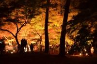 もみじ公園ライトアップ