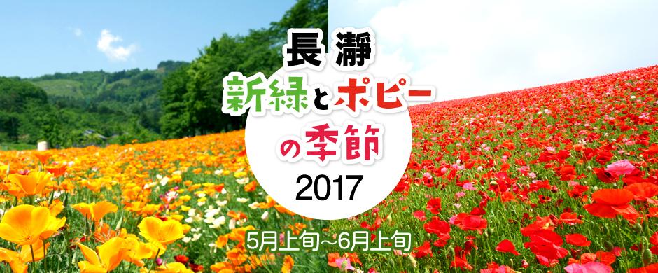 長瀞新緑とポピーの季節2017