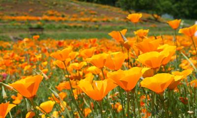 ~新緑と初夏の花々~