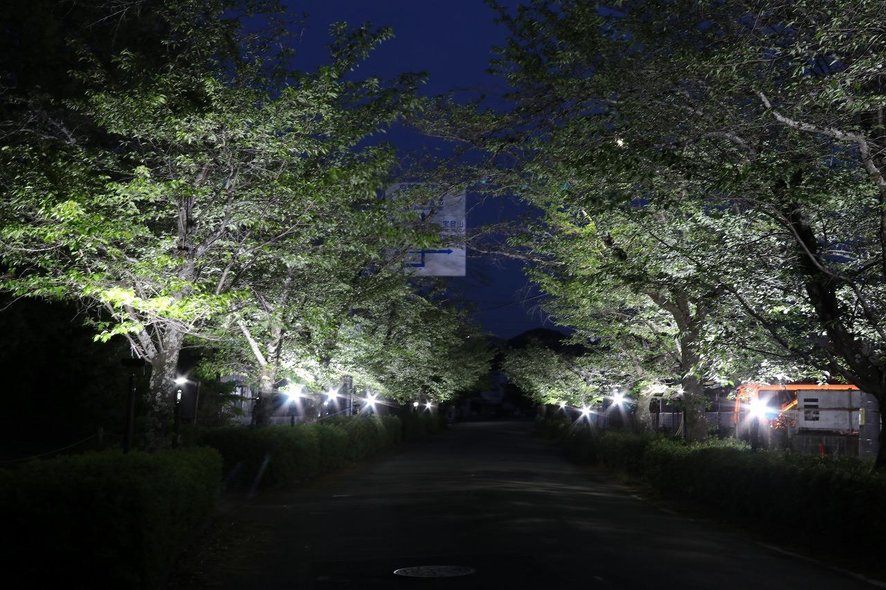 北桜通り「桜若葉のライトアップ」5月9日まで開催中